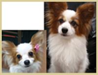 彫刻例4 愛犬の写真を彫刻